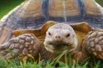 Walking the Tortoise