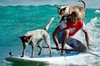 Surfing Dogs