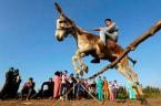 High Jumping Donkey