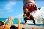 Sink Your Teeth Into 5 Fun Shark Week Facts!