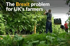 Brexit brings woes to Britain's farms