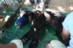 Wild animals rescued from Aleppo zoo