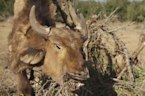 Murder, corruption and Kenya's cattle barons