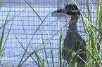 South Carolina aquarium preps its animals for solar eclipse