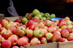 Researchers Learn More About How The Apple We Know And Love Came To Be