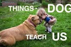 Things Dogs Teach Us - Guide To Living
