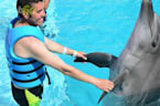 Dolphins And Friends Have Very Human-like Lives