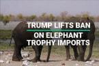 Trump Lifts Ban On Elephant Trophy Imports