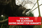 Vultures: The Unlikely Hero Saving Humanity Money
