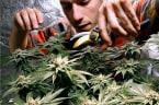 Vermont And Marijuana Just Got Friendlier