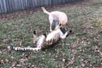 Emmett the cheetah hangs out with pooch pal Cullen