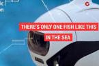 Wireless underwater fish drone