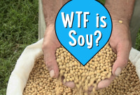 WTF is Soy?