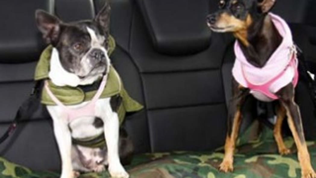 Recommended Product: Buddy Belt, PetBuckle Tether and Camo Seatcover
