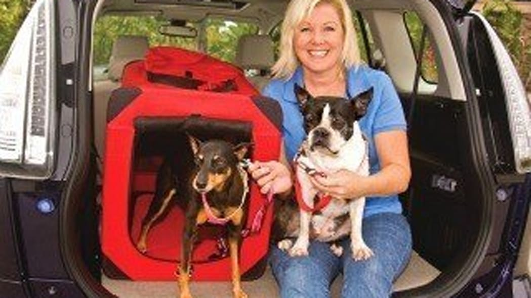 The Danger For Pets On The Road
