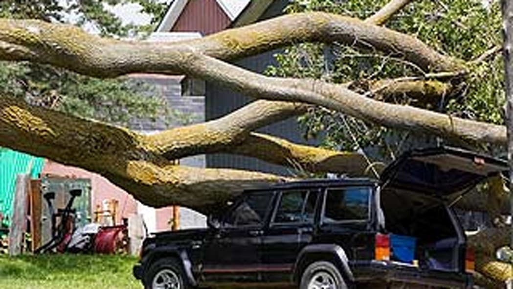 3. Damage To Your Car From An Animal Or Mother Nature