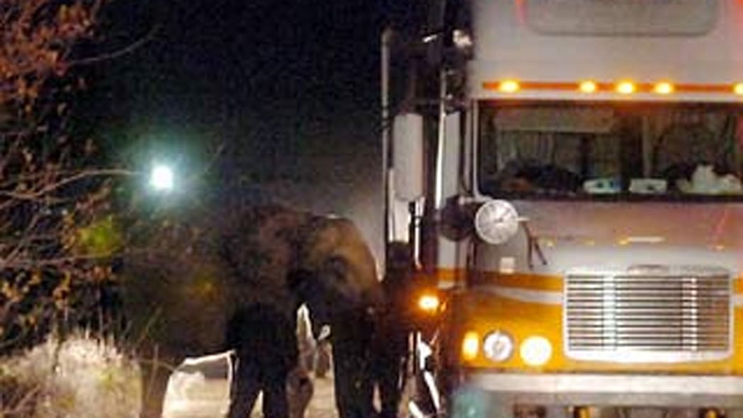SUV nearly slams into elephant