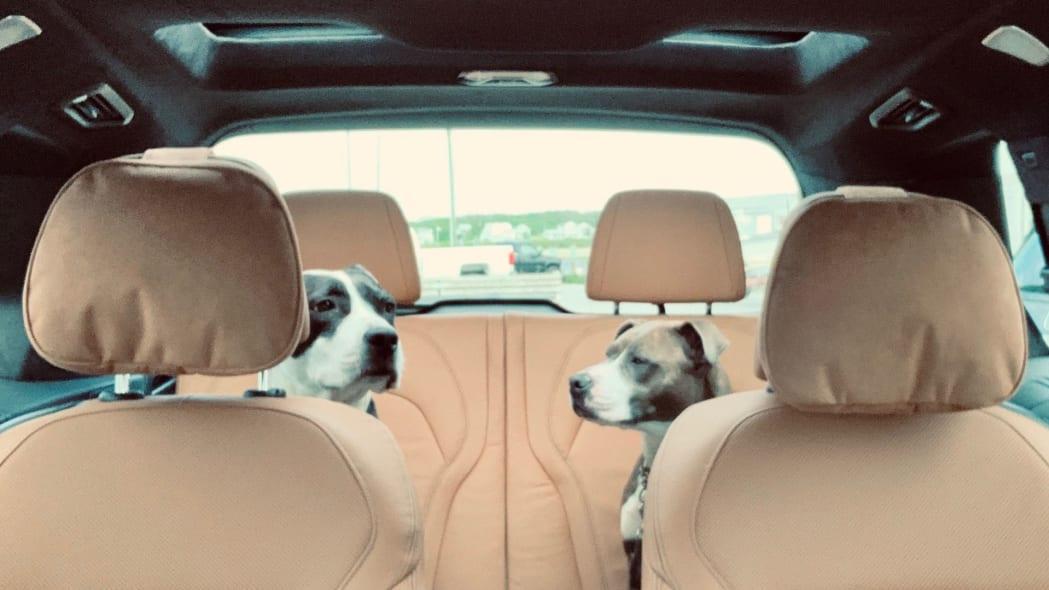 2020 BMW X7 M50i third row puppies