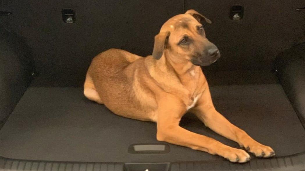 Tucson, a dog at a Hyundai dealer