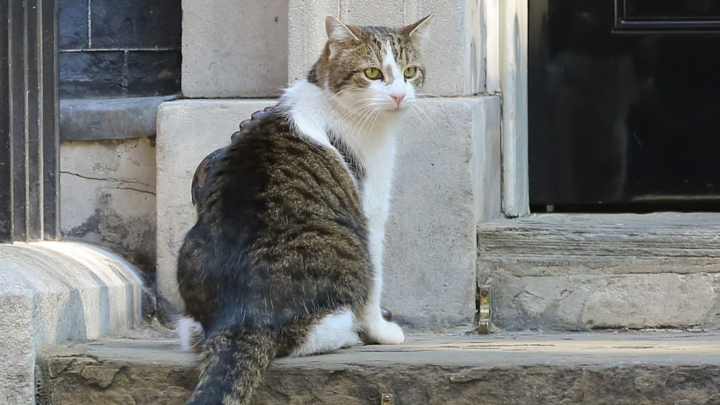 Larry, the 10 Downing Street cat and Chief Mouser to the...