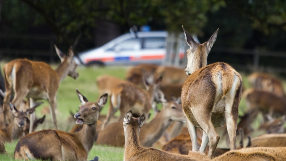 If You Hit A Deer, Report It