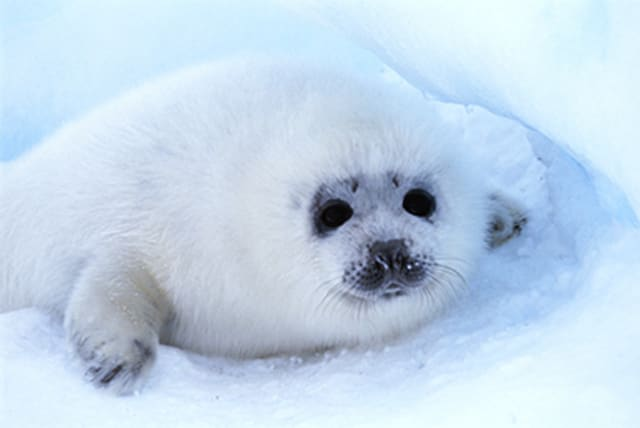Baby seals in pictures (just because)