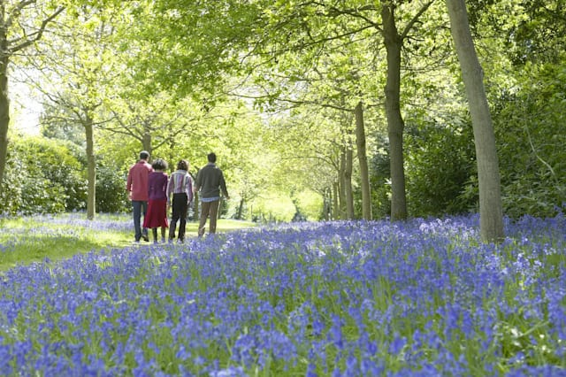 England's best spots to see bluebells