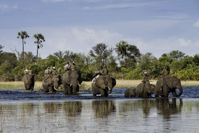 World's most amazing safaris