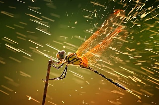 National Geographic Photography Contest 2011