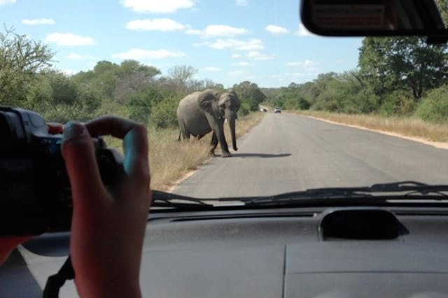 Elephant crashes into car full of tourists in South Africa