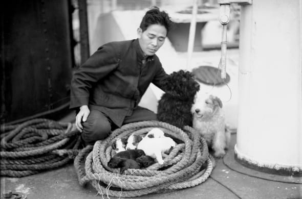 A seaman on boat Yahiko Maru watches a litter of puppies coiled in a