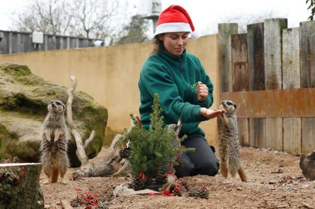 Animals enjoy Christmas at London Zoo