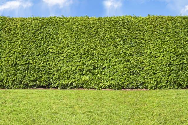 Tall hedge, endless seamless pattern