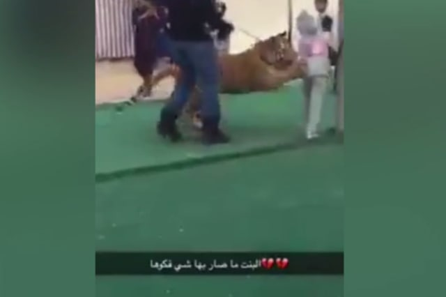 Little girl survives tiger attack in Saudi Arabia