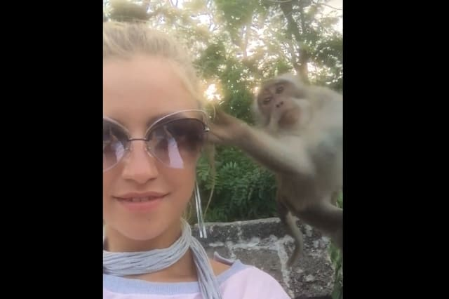 Cheeky monkey steals sunglasses from girl's face