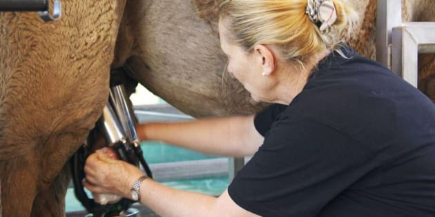 Lauren Brisbane said every cow is given an udder health check before milking