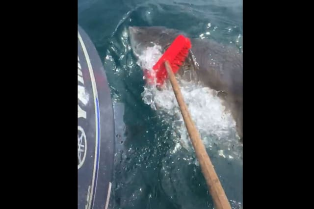 Brave fisherman fends off shark with broom