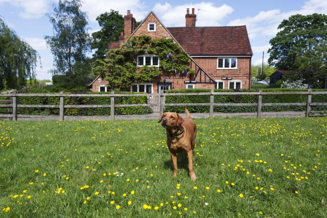 Dog playing in field in rural neighborhood