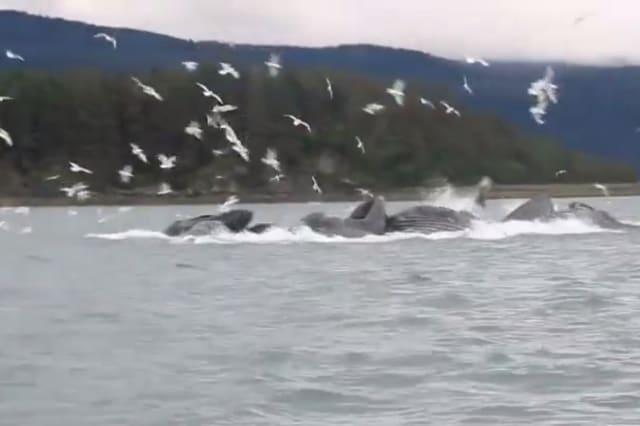 Tourists witness amazing whale 'feeding frenzy'