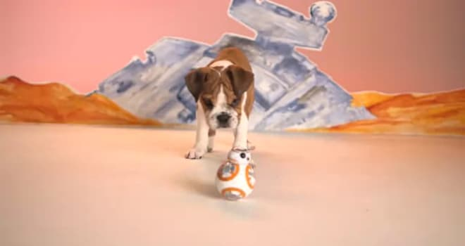 puppies, puppy, bb-8, bb-8 toy, star wars, the force awakens