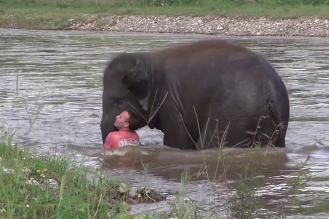 Elephant dives into water to rescue keeper