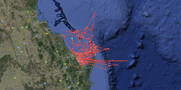 People watched Maroochy's pings in real time on the OCEARCH
