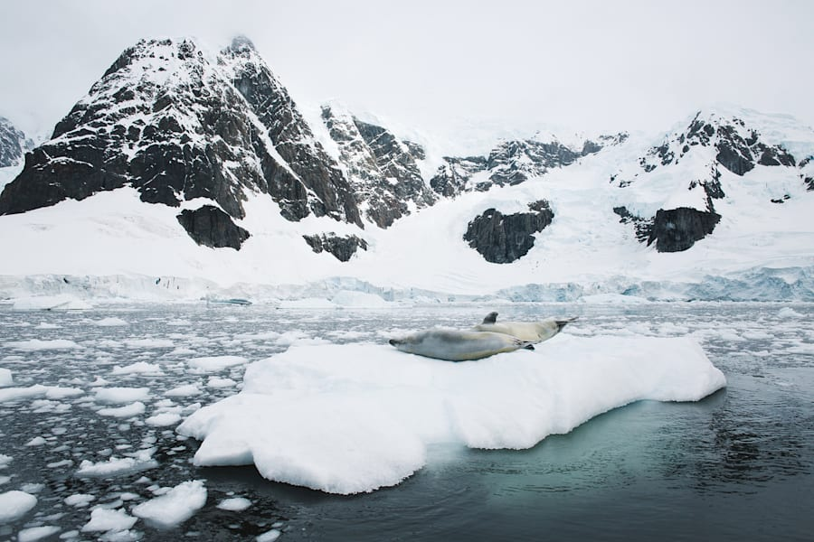 A seal winter bathes on ice in the