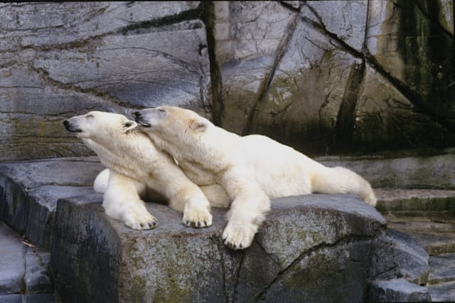 Polar bear to switch zoos after 'divorce'