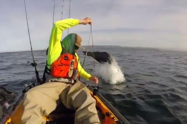 Sea lion surprises fisherman with dramatic dives