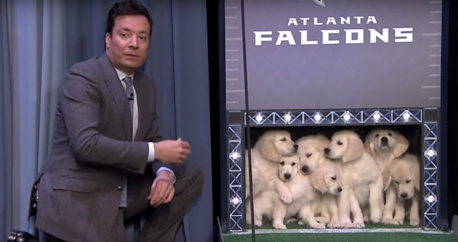 puppies, puppy predictors, super bowl, winners, champions, super bowl li, super bowl 51, the tonight show
