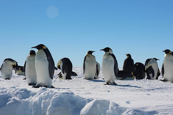 Antarctica scientists discover how penguins survived the ice age