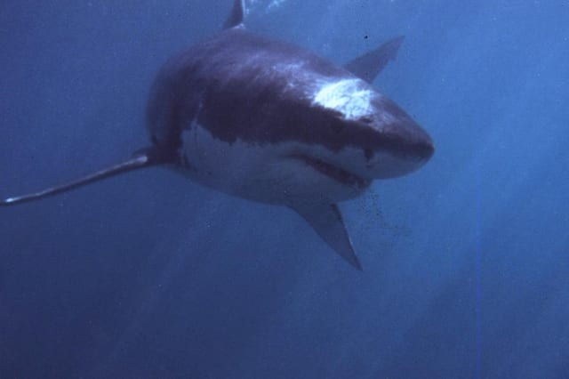 New $16m shark defence strategy to launch in Australia's NSW