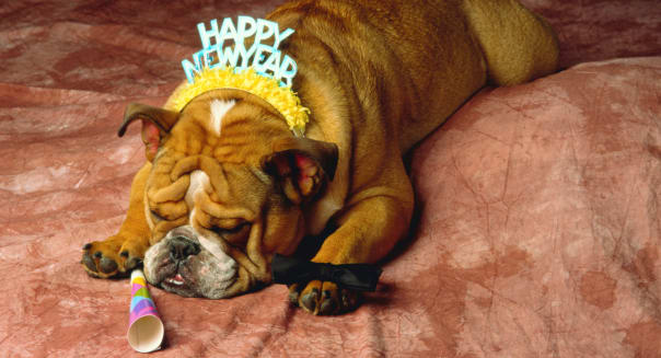 Bulldog wearing 'Happy New Year' party hat