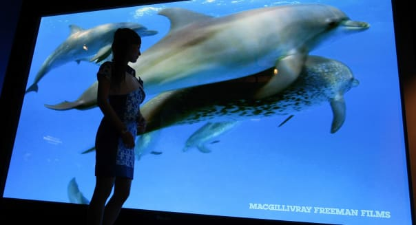 Japan Flat Panel Display Expo (A model stands by Panasonic's 150-inch high-definition plasma TV display, claimed to be the world